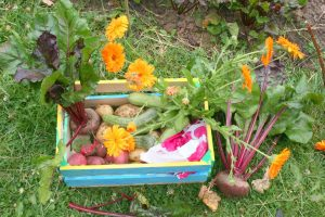 vegetable box-small