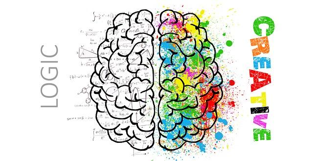 Opbouw hersenen logica en creatieve kant