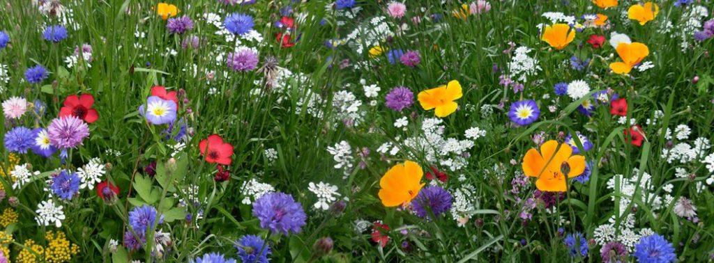 Deze afbeelding heeft een leeg alt-attribuut; de bestandsnaam is bloemen-1024x378.jpg